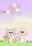 Cats family in spring Stock Photography