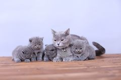 Cats family on a wooden background Stock Photos