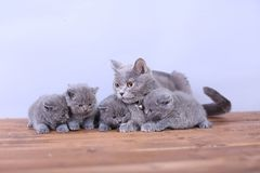 Cats family on a wooden background Stock Images