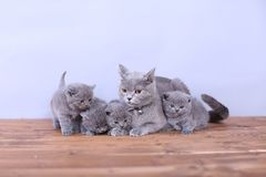 Cats family on a wooden background Stock Photography