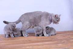 Cats family on a wooden background Stock Image