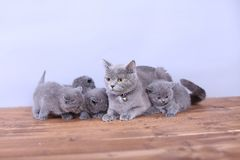 Cats family on a wooden background Stock Photo