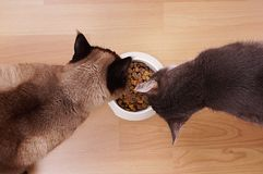 Cats with feeding bowl Royalty Free Stock Photo
