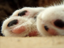 Cats feet Royalty Free Stock Images