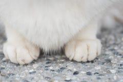 Cats feet Royalty Free Stock Photo
