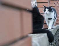Cats on fence. Cute black and white cats on the fence Stock Image