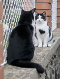 Cats on fence. Cute black and white cats on the fence Royalty Free Stock Photography