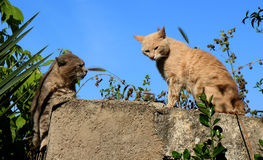 Cats. On a fence in a garden Stock Photography