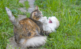 Cats fight Stock Image