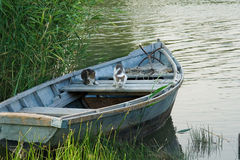Cats in a fishing boat Stock Images