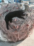 Cats on the fishing net. Sicily, Italy Stock Image