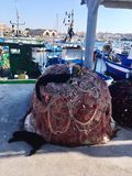 Cats on the fishing net. Sicily, Italy Royalty Free Stock Image