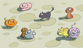 Cats on a floor Royalty Free Stock Photography