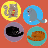 Cats Stock Images