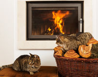Cats In Front Of Fireplace. Cats resting,Cat In Front Of Fireplace royalty free stock photography
