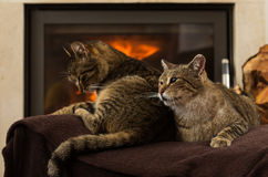 Cats In Front Of Fireplace. Cats resting,Cat In Front Of Fireplace royalty free stock photos