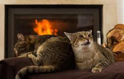 Cats In Front Of Fireplace. Cats resting,Cat In Front Of Fireplace stock photography