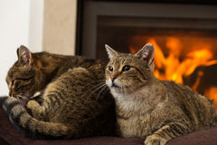 Cats In Front Of Fireplace. Cats resting, Cat In Front Of Fireplace stock photos