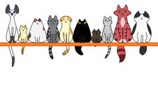 Cats front in a row with copy space.  royalty free illustration