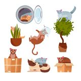 Cats in funny places: in a box, in a washing machine, on a room flower, in a pot, in space, sleeping on dog. A set of kitties in
