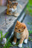 Cats game. Play the game of cat Royalty Free Stock Photography