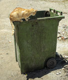 Cats on and in garbage container Royalty Free Stock Photos