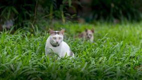 Cats in garden with green grass Stock Image