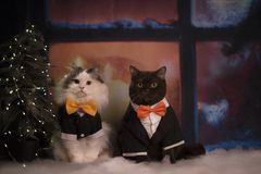 Cats are getting ready for the new year Royalty Free Stock Photo