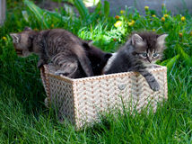 Cats  on a grass Royalty Free Stock Photo