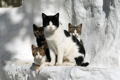 Cats Greece Royalty Free Stock Photos