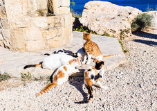 Cats Happily Enjoy Cat Food Feed by Tourists Stock Image