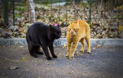 Cats having a standoff Royalty Free Stock Photography