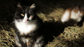 Cats in the hay stock video