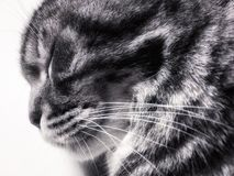 Cats head with closed eyes stock photography