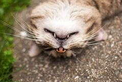 Cats head turned upside down.  Royalty Free Stock Images