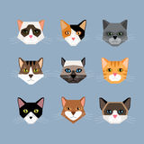 Cats Heads In Flat Style Stock Photography