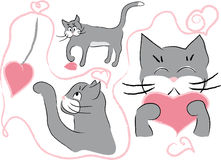 Cats with hearts. Grey cat playing with hearts isolated on white Stock Image
