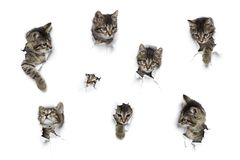 Cats in holes of paper royalty free stock images
