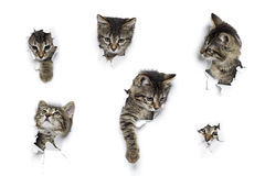 Cats in holes of paper stock photo
