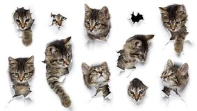 Cats in holes of paper stock images