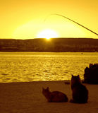 Cats and hook at sunset pier. Fishhook and waiting cats on pier during yellow sunset at Varna port,Bulgaria,Black sea coast Royalty Free Stock Images