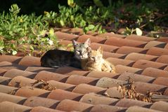 Cats on a hot roof. Two cats sunbathing on a roof in the hot Spanish morning sun Stock Photography