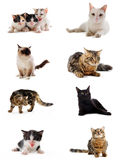 Cats In Studio Royalty Free Stock Image