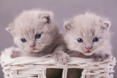 Cats In The Basket Stock Photos