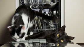 Cats indoor. Two cats - black and white - resting in a dishwasher Royalty Free Stock Images