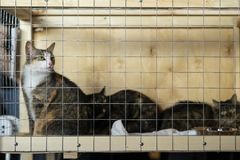 Cats with intelligent, sad eyes at a special charity exhibition looking from lattice of cell , expecting them to find stock photos