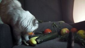 Cats are interested in vegetables. Stock footage. Two cats became interested in folded vegetables and sniffed at them