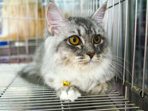 Cats in kennel cage Royalty Free Stock Image