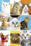 Cats. Stock Image