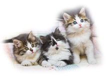 Cats kitten pets domestic Stock Images